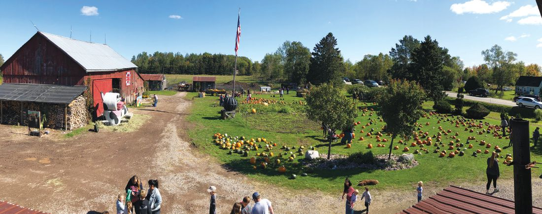 Aerial view of the farm with pumpkins everywhere.