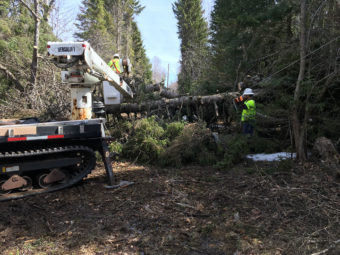 Linemen clearing a fallen tree on the ground.